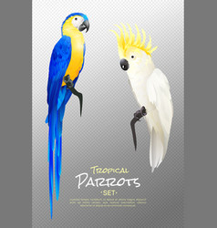 Realistic tropical parrots set vector