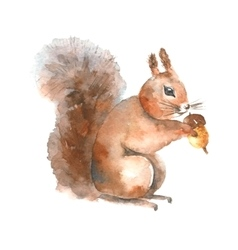 Watercolor squirrel vector