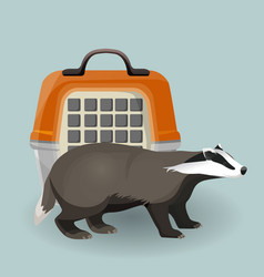 badger carry cage and animal isolated on grey vector image vector image