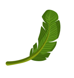 exotic palm green leaf colorful cartoon vector image