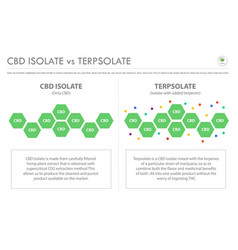 Cbd isolate vs terpsolate horizontal business vector