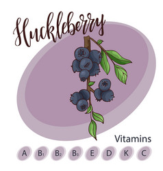 Fruit element of huckleberry hand drawn vector