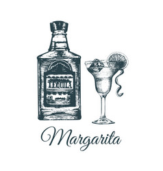 Hand sketched tequila bottle and margarita glass vector