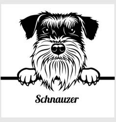 weimaraner - peeking dogs - - breed face head vector image