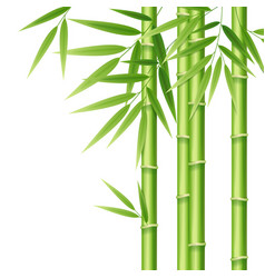 realistic 3d detailed bamboo shoots vector image vector image