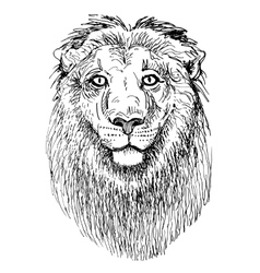 artwork lion sketch black and white drawing of vector image