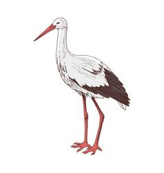 hand drawn stork vector image