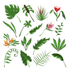 jungle leaves and flowers set vector image