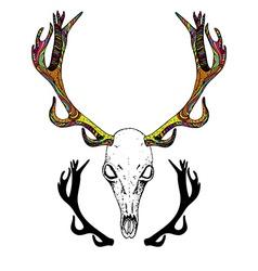 Color sketch deer skull vector