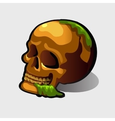 Old human skull image for your needs vector image vector image