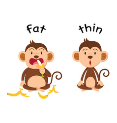 opposite words fat and thin vector image