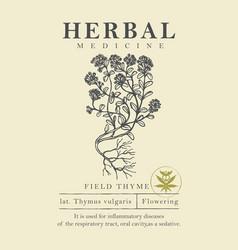 Botanical a hand drawn field thyme vector