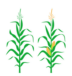 Corn stalk vector