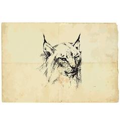Eurasian lynx - pencil drawing to vector image