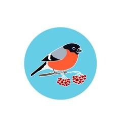 Icon Colorful Bullfinch vector
