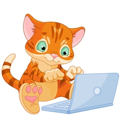Kitten with laptop vector image