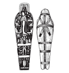 mummy and cover of coffin vintage vector image