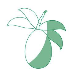 Tree tomato fruit vector
