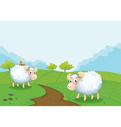 Two sheeps in the farm vector image