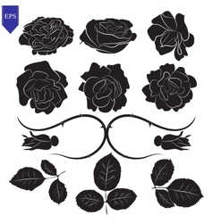 Set of different flower and leaves of roses vector image