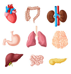 Cartoon human internal organs set vector