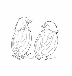 Drawing two birds conversation vector