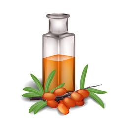 Sea buckthorn branch with berries and bottle of oi vector image