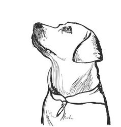 Sketching dog portrait pet hand drawn vector