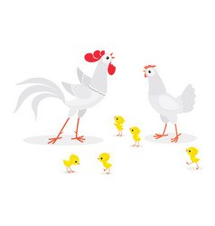white chicken family isolated on background vector image
