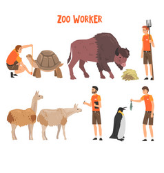 Zoo workers or veterinarians examining feeding vector