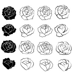 black rose flower design vector image vector image