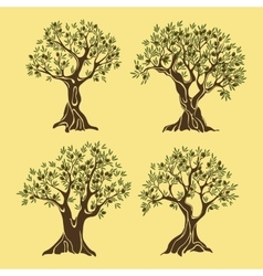 Set of greek olive oil trees in vintage style vector