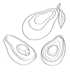 avocado black line vector image