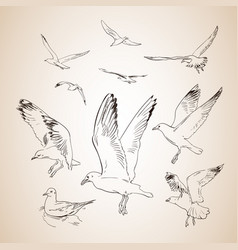 sketch seagulls hand drawn vector image
