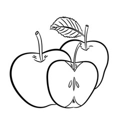 line drawing of apples -simple line vector image vector image