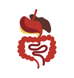 Human digestive system isolated icon vector