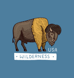 native american buffalo wild animal old label vector image