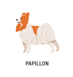 papillon or continental toy spaniel lovely small vector image