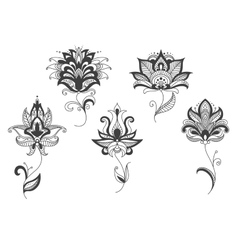 Persian lace gray flowers in paisley style vector
