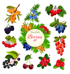 icons set of berries and wildberry fruits vector image