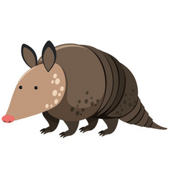 Armadillo on white background vector
