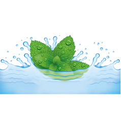 Fresh mint leaves falling to water vector