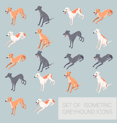 set of greyhound icons vector image