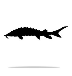 sturgeon fish black silhouette aquatic animal vector image