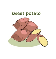 Sweet potatoes isolated vector image vector image