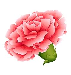 A fresh carnation pink flower vector
