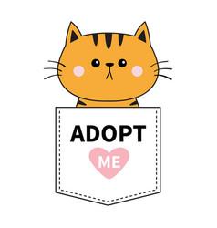 orange cat sitting in pocket adopt me pink vector image