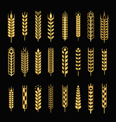 wheat golden ear logo icons set isolated vector image
