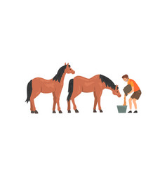 Zoo worker feeding horses professional zookeeper vector