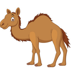 Cartoon camel isolated on white background vector